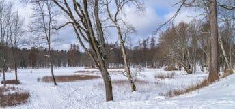 Die Waldlichtung im Winter stockfotografie