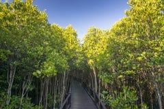 Die Waldmangrove bei Petchaburi, Thailand Lizenzfreies Stockbild