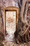 Die Wand einer alten Festung wird mit Baumwurzeln bedeckt Lizenzfreies Stockfoto