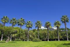 Die Wand von grünen Palmen auf einem blauen Himmel im Strandpark Antalya, die Türkei Stockfotos
