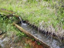 Die Wasserstelle für Tiere lizenzfreie stockfotografie
