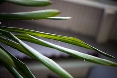 Die Wassertröpfchen auf Blättern nach Regen stockfotografie