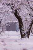 Die weiße Farbe der Natur Die Niederlassungen sind, es waren nach einem Wintersturm schneebedeckt lizenzfreies stockbild