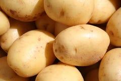 Die weiße Kartoffel Stockfotografie