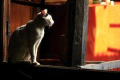 Die weiße Katze sitzt am Fenster stockbild