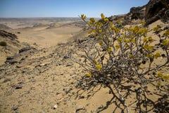 Die weiße Sandwüste in der Skeleton Küste lizenzfreies stockbild