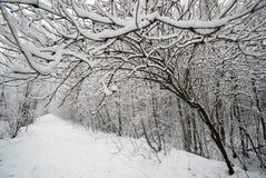 Die weiße Spur im Wald Stockfotografie