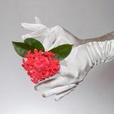 Die weißen Handschuhe der eleganten Frau, die Herz halten, formten Blumen auf weißem Hintergrund Lizenzfreie Stockbilder