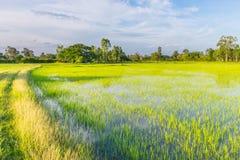 Die Weichzeichnung der Straße, grünes Feld des ungeschälten Reises mit dem schönen Himmel und Wolke am Nachmittag Thailand, der S Stockbilder
