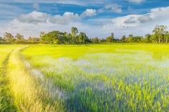 Die Weichzeichnung der Straße, grünes Feld des ungeschälten Reises mit dem schönen Himmel und Wolke am Nachmittag Thailand, der S Lizenzfreie Stockbilder