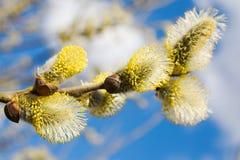 Die Weideblüten lizenzfreie stockfotos