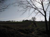die Weidenfelder lizenzfreie stockbilder