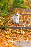 Weiße Katze, die auf gelbe Blätter sitzt Stockbilder