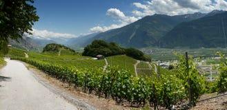 Die Weinberge von saillon Wallis die Schweiz Lizenzfreies Stockbild