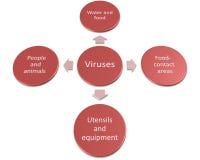 Die Weise von Bakterien und von Viren kann übertragen werden Lizenzfreie Stockbilder