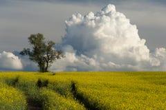 Die Weise zur Wolke Stockfotografie