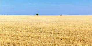 Die Weizenfelder Lizenzfreie Stockfotografie