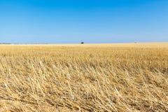 Die Weizenfelder Stockfotografie