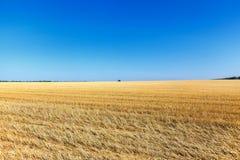 Die Weizenfelder Stockfotos