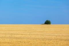 Die Weizenfelder Lizenzfreies Stockfoto