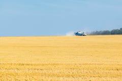 Die Weizenfelder Lizenzfreie Stockbilder