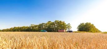 Die Weizenfelder Stockbilder