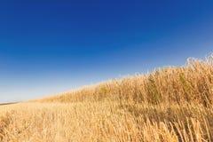 Die Weizenfelder Stockfoto