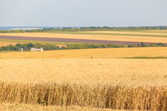 Die Weizenfelder Lizenzfreies Stockbild