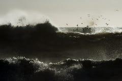 In die Wellen lizenzfreie stockfotos