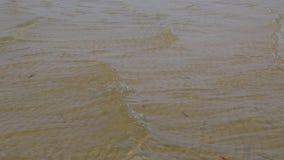 Die Wellen auf dem See stock footage