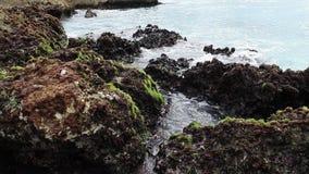 Die Wellen des Ozeans, die auf dem Riffufer brechen stock footage