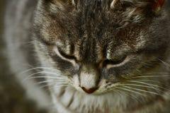 Die wenig Katzenreste lizenzfreie stockbilder