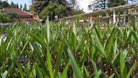 Die wenig Landwirtschaft lizenzfreies stockfoto