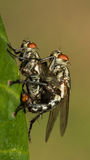 Die wenigen Fliegen Lizenzfreie Stockfotografie