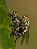 Die wenigen Fliegen Stockfotos