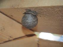 Die Wespe errichtet ein gef?hrliches Insekt des kugelf?rmigen Nestes lizenzfreie stockfotografie
