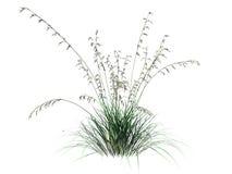 die Wiedergabe 3d des Blumenbusches lokalisiert auf Weiß kann für FO benutzt werden Stockfotos