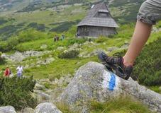 Die Wiese des Berges Stockfotos