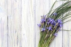 Die wilde Iris auf einem hölzernen Hintergrund Lizenzfreies Stockfoto