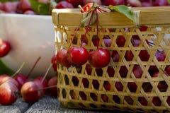 Die wilden Äpfel Stockfotos