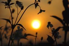 Die wilden Blumen und der Sonnenuntergang Stockbilder
