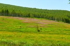 Die wilden Blumen und der Wald auf der Steppe Stockbilder