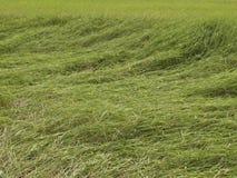 Die Wind-Spur Stockfotos