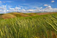 Die Windparkturbinen, die auf Hügel weiß sind, kontrastieren grünes Gras und blauen Himmel, USA Lizenzfreie Stockbilder