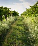 Die wineyards stockfoto