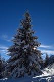 Die Winter-Geschichte Lizenzfreie Stockfotos