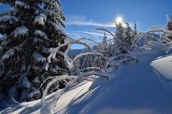Die Winter-Geschichte Stockbilder