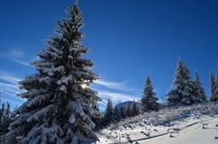 Die Winter-Geschichte Stockfotografie