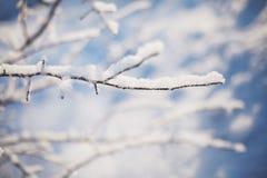 Die Winterbaumaste, die mit Schnee in der Sonne umfasst werden, beleuchten Stockfotos