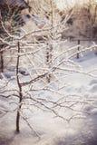 Die Winterbaumaste, die mit Schnee in der Sonne umfasst werden, beleuchten Lizenzfreie Stockfotografie